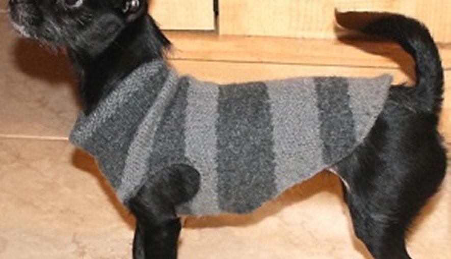 πως να κανετε πουλοβερ στον σκυλο σας με κατι που εχετε σπιτι