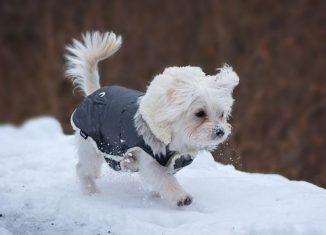 πατρον για πουλοβερ σκυλου καθε μεγεθους